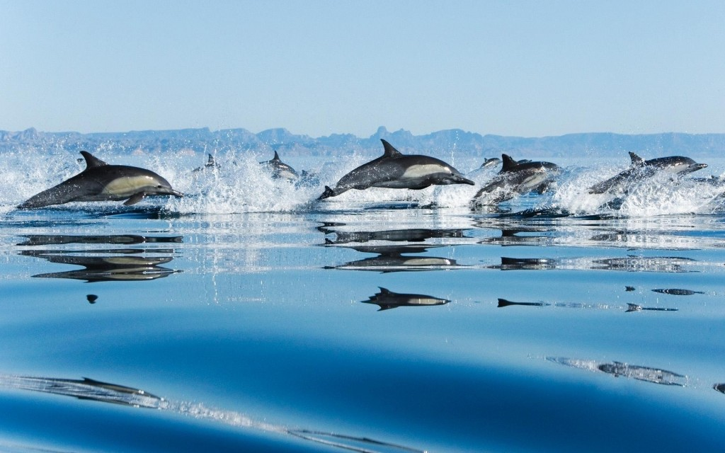 Golfinhos06